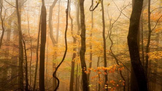 有雾的秋天的树林
