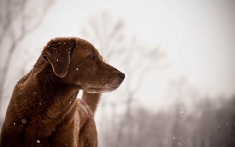 享受雪花的狗
