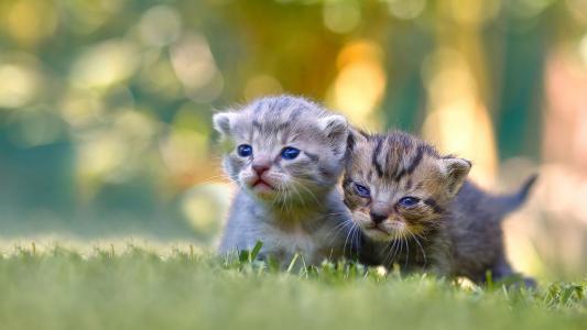 可爱娇小的小奶猫
