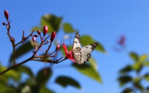 开花的蝴蝶