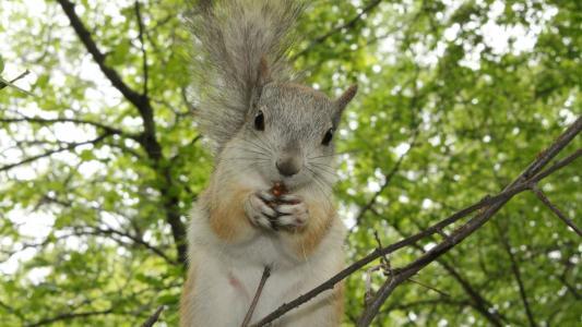 松鼠在树上吃