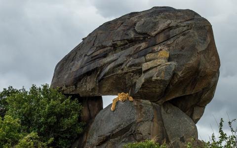 懒惰的狮子在悬崖上
