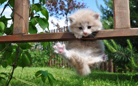 小猫挂在篱笆上