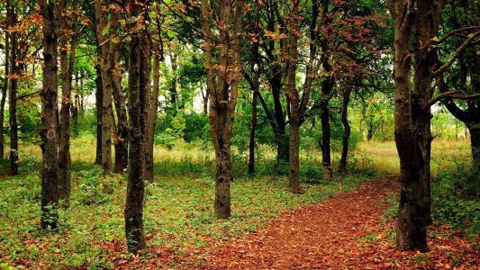 在森林里的路径