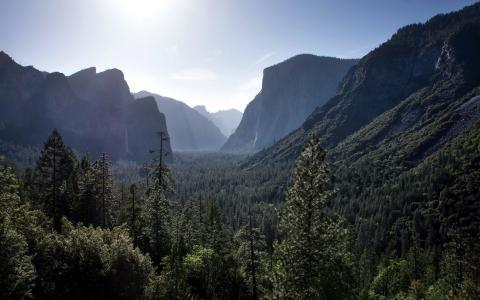 在山谷的灿烂的森林