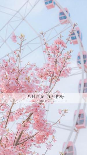 八月再见九月你好唯美浪漫樱花