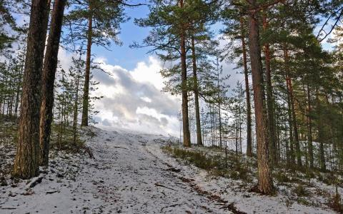 雪在森林里