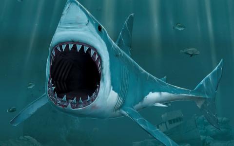 鲨鱼在深处