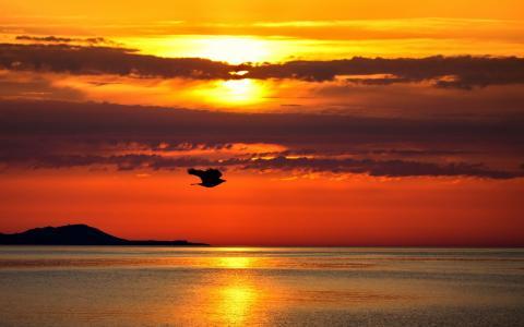 完美的日落
