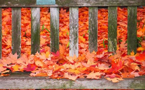 在长凳上的秋天的颜色