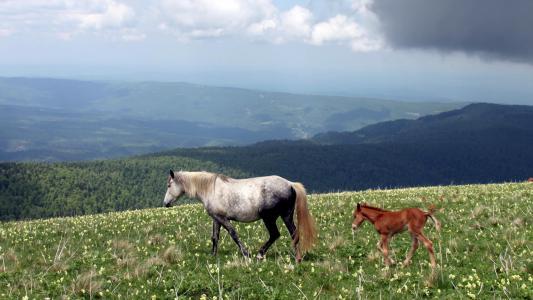 马和它在田间的小马驹