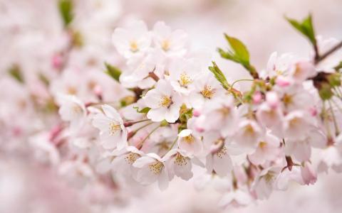 淡粉色的花朵