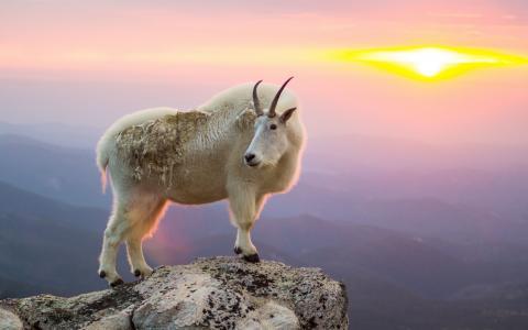 山羊在悬崖上