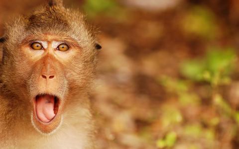 惊呆了的猴子