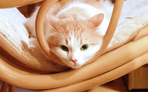 灿烂的小猫
