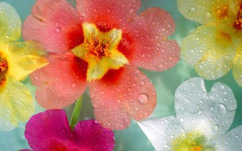 水滴在花瓣上