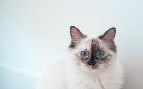 超级可爱淘气小猫咪