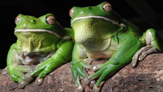 绿色的青蛙