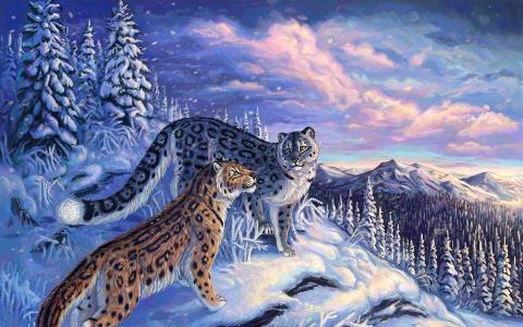 在山上的雪豹