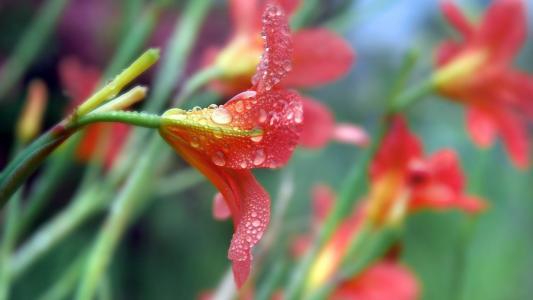 清新养眼的唯美花朵