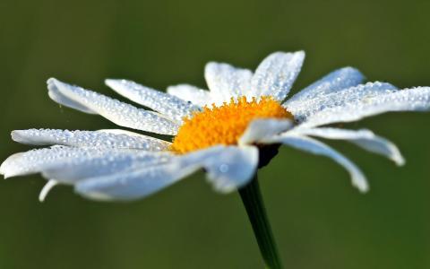 雨滴滴在最美的花朵上