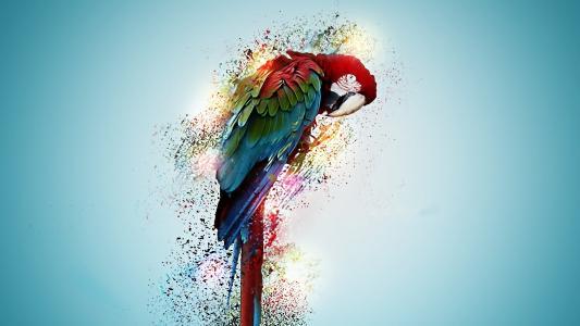 被绘的金刚鹦鹉