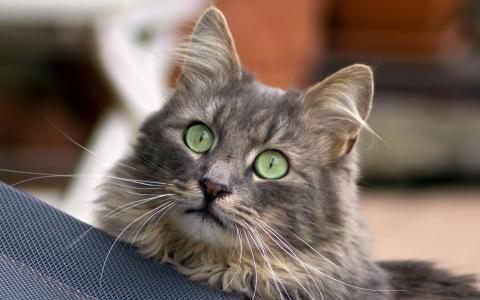 大绿色的眼睛