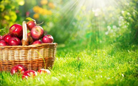篮子里的苹果在草地上