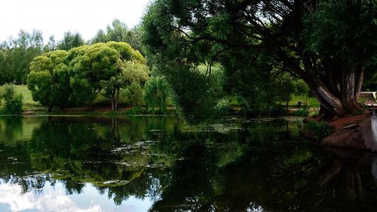 在公园里的绿色湖泊