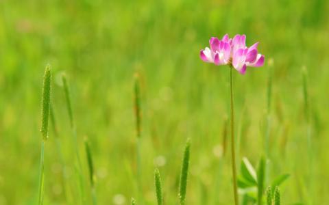 小粉红色的花