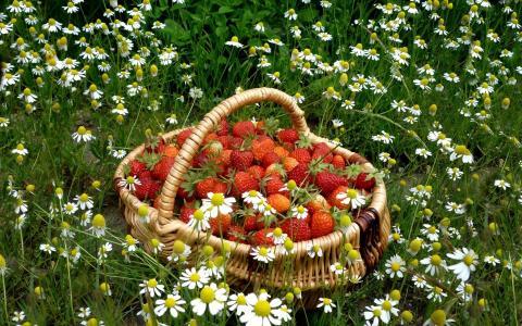 篮子里装满了草莓