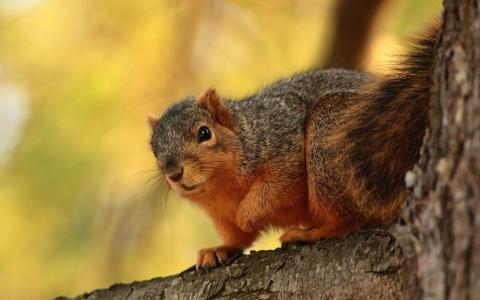 松鼠在树上