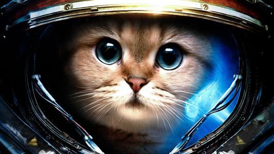猫在星际争霸西装