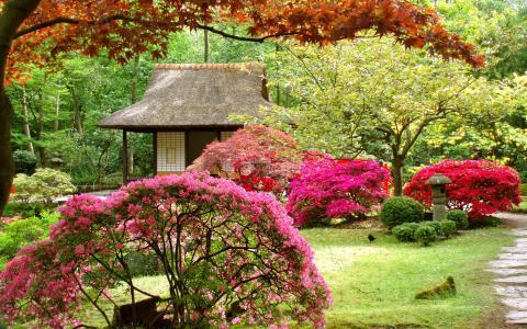 充满花的花园