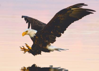 飞翔的老鹰