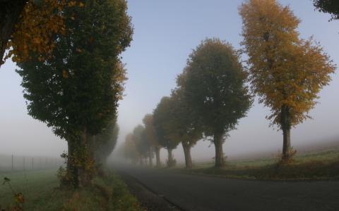 有雾的树木和路