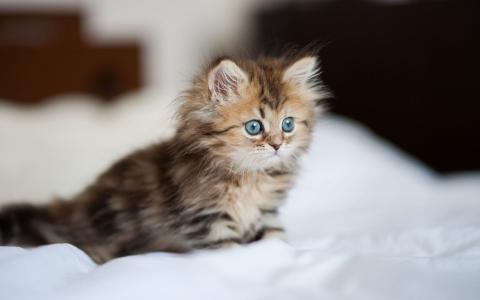 美丽的小猫