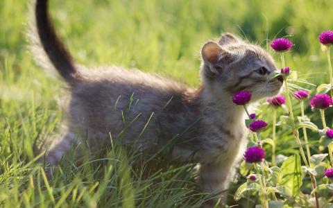 嗅到花的Skitten