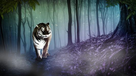 老虎在森林里