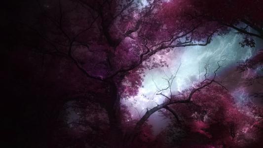 粉色的森林