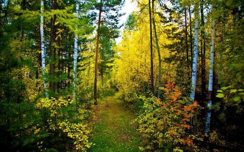 在夏季森林的路径