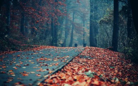 叶子盖了公园胡同