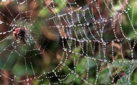 蜘蛛在它的网上